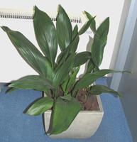 Растения, нетребовательные к уходу
