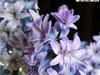 Цветы, растущие у дома